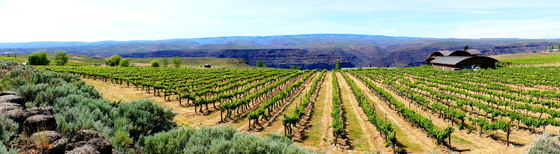 Vineyards at Cave B.JPG
